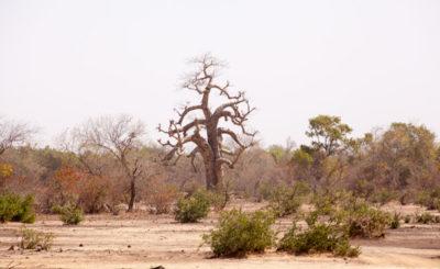 Сахель на границе Мали и Буркина Фасо