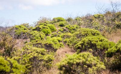 эндемики Галапагосов
